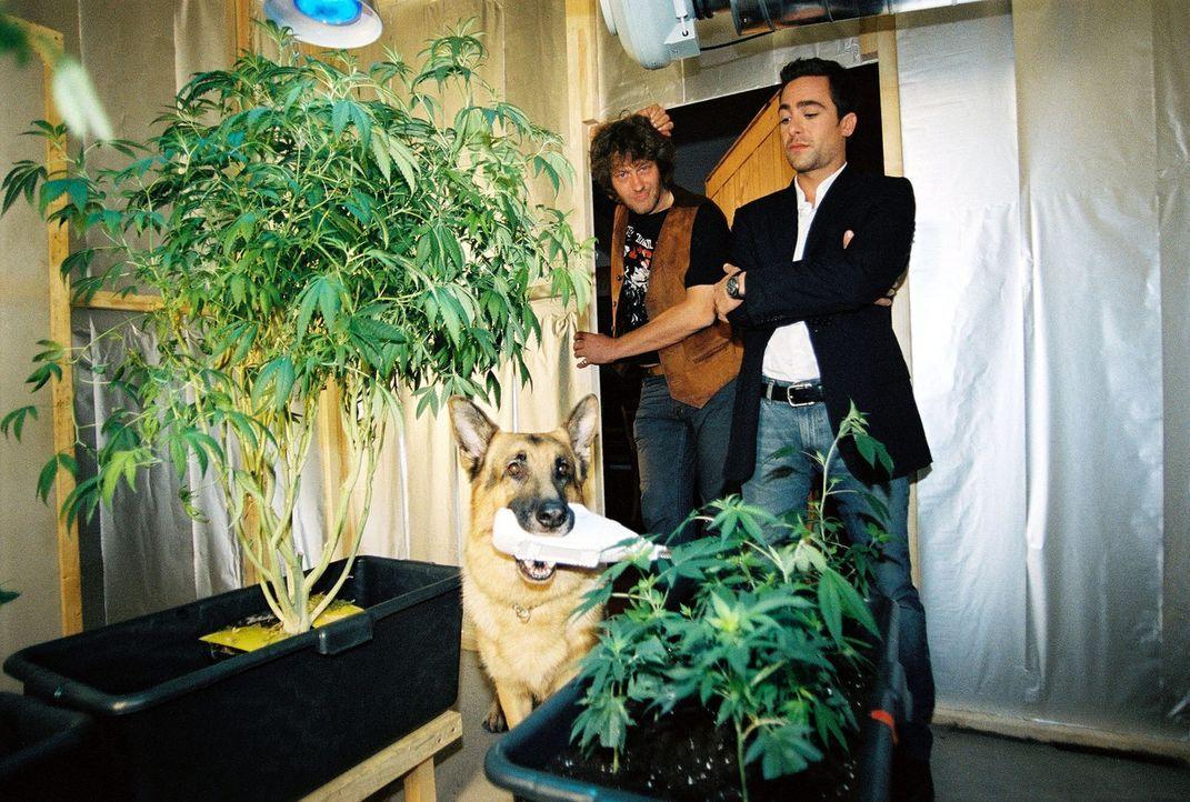 Marc Hoffmann (Alexander Pschill, r.) und Rex stoßen bei dem Verdächtigen Holaubek (Heli Deinboek, l.) auf eine illegale Hanfplantage. - Bildquelle: Sat.1