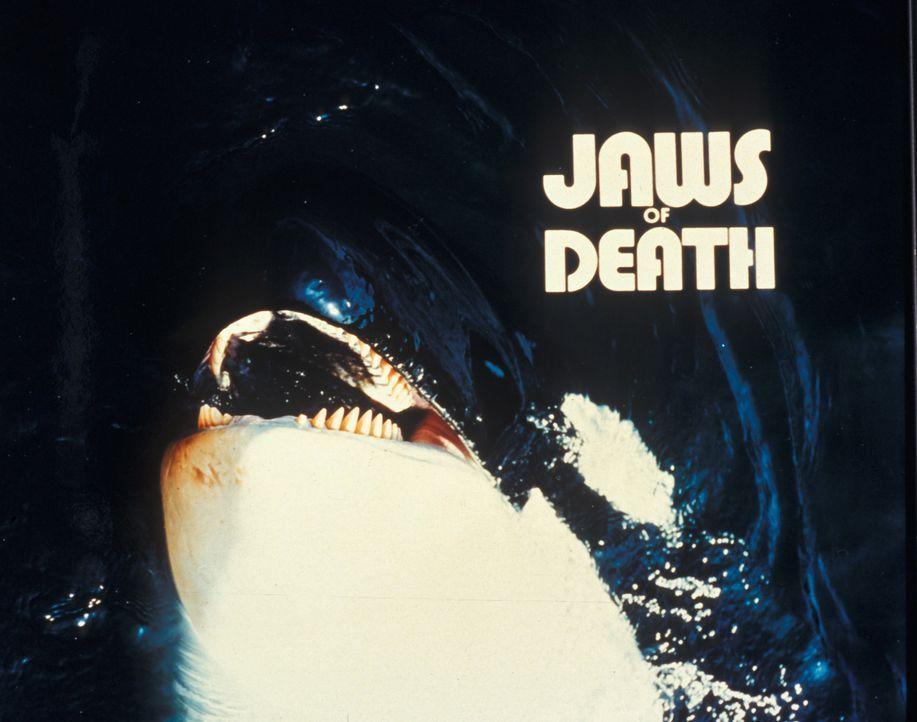 Auge um Auge, Zahn um Zahn: Angriffslustige Haie und Wale rächen sich an Tierquälern ...
