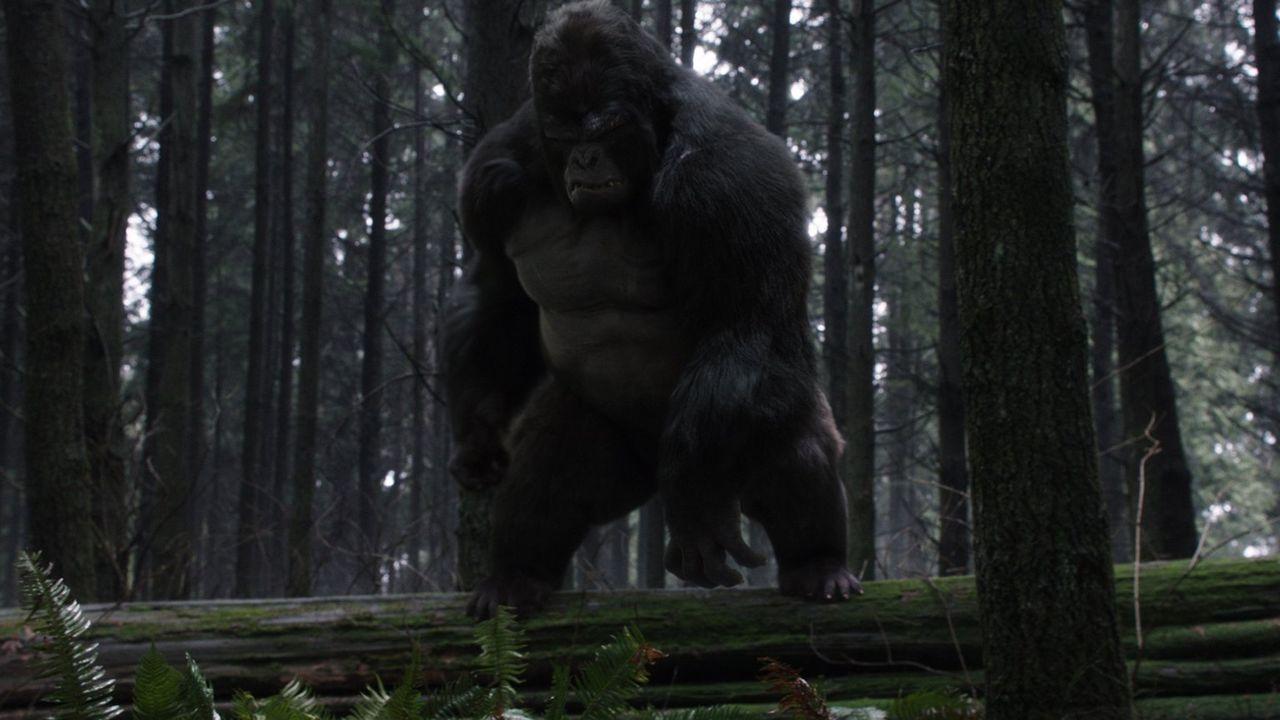 Als Harry von Grodd (David Sobolov) entführt wird, ahnen Flash und sein Team nicht, dass der Gorilla ihn aus einem ganz bestimmten Grund entführt ha... - Bildquelle: 2016 Warner Bros.