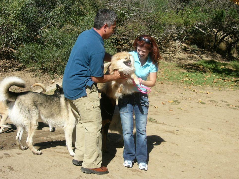 """Der spitz """"Lulu"""" ist im Hundepark kein gerngesehener Gast, weil er alle anderen Hunde in den Wahnsinn treibt. Emily (r.) bittet den Hundeflüsterer C... - Bildquelle: Rive Gauche Intern. Television"""