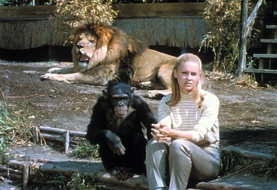 Paula (Cheryl Miller) ist die Tochter von Tierarzt Dr. Tracy. Gemeinsam mit ihren treuen Begleitern Clarence, ein schielender Löwe, und Judy, eine t... - Bildquelle: 2007 Warner Bros. All Rights Reserved.
