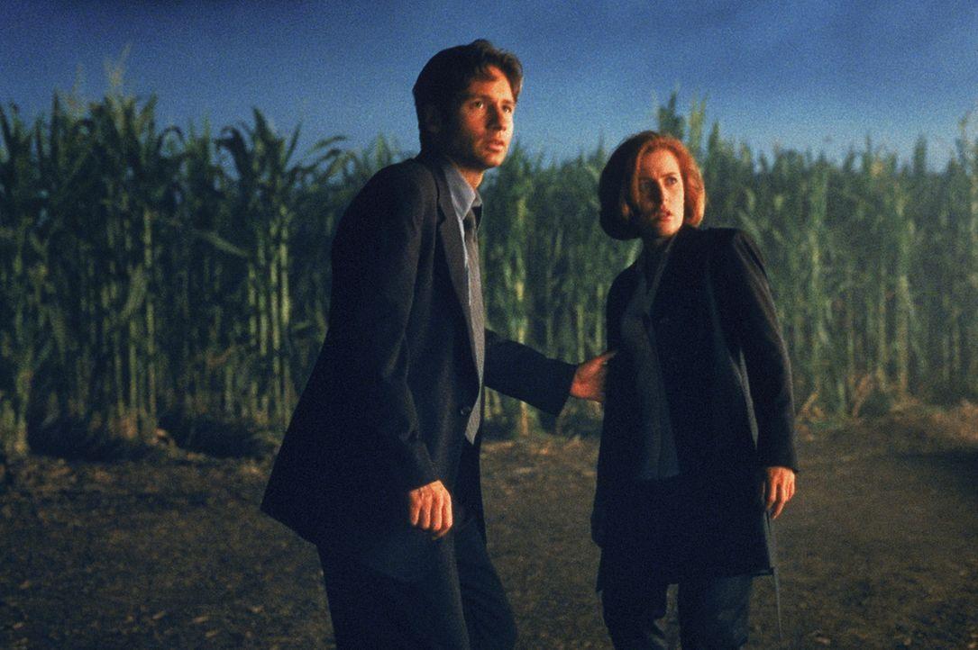 Die Ermordung einer amerikanischen Biologin ruft die FBI-Agenten Special Agent Fox Mulder (David Duchovny, l.) und Special Agent Dana Scully (Gillia... - Bildquelle: Twentieth Century-Fox Film Corporation