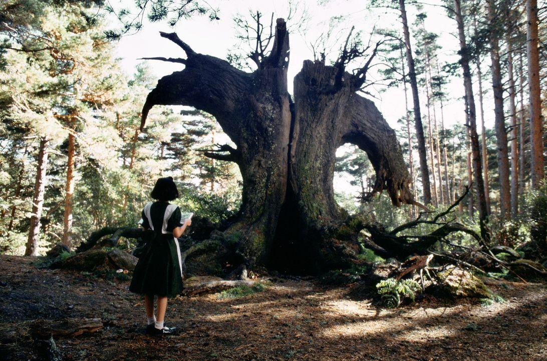 Während der Franco Diktatur in Spanien träumt sich das unschuldige Mädchen Ofelia (Ivana Baquero) in eine Hoffnung stiftende Zauberwelt ... - Bildquelle: Telepool GmbH