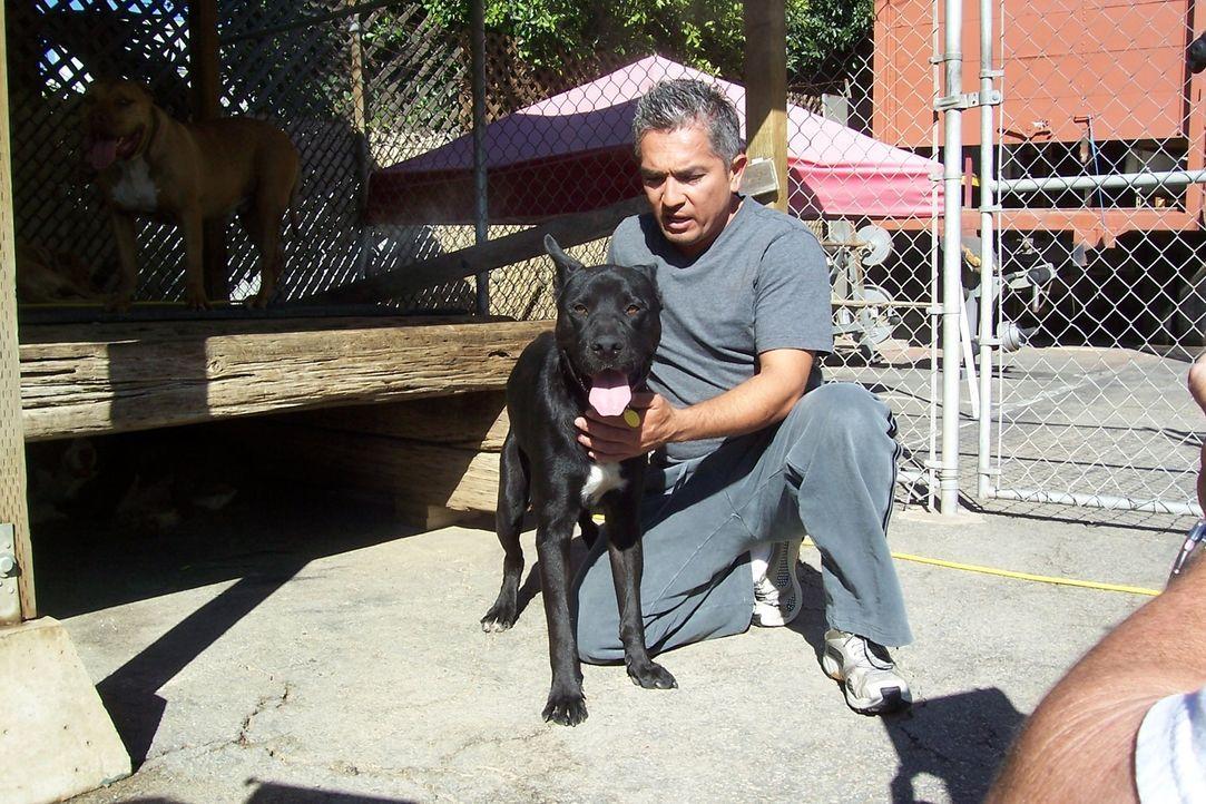 Cheri hat sich drei Hunde aus ihrer Gruppe ausgesucht, die besonderer Hilfe bedürfen. Diese Tiere scheinen stärker traumatisiert zu sein als ihre Ar... - Bildquelle: Rive Gauche Intern. Television