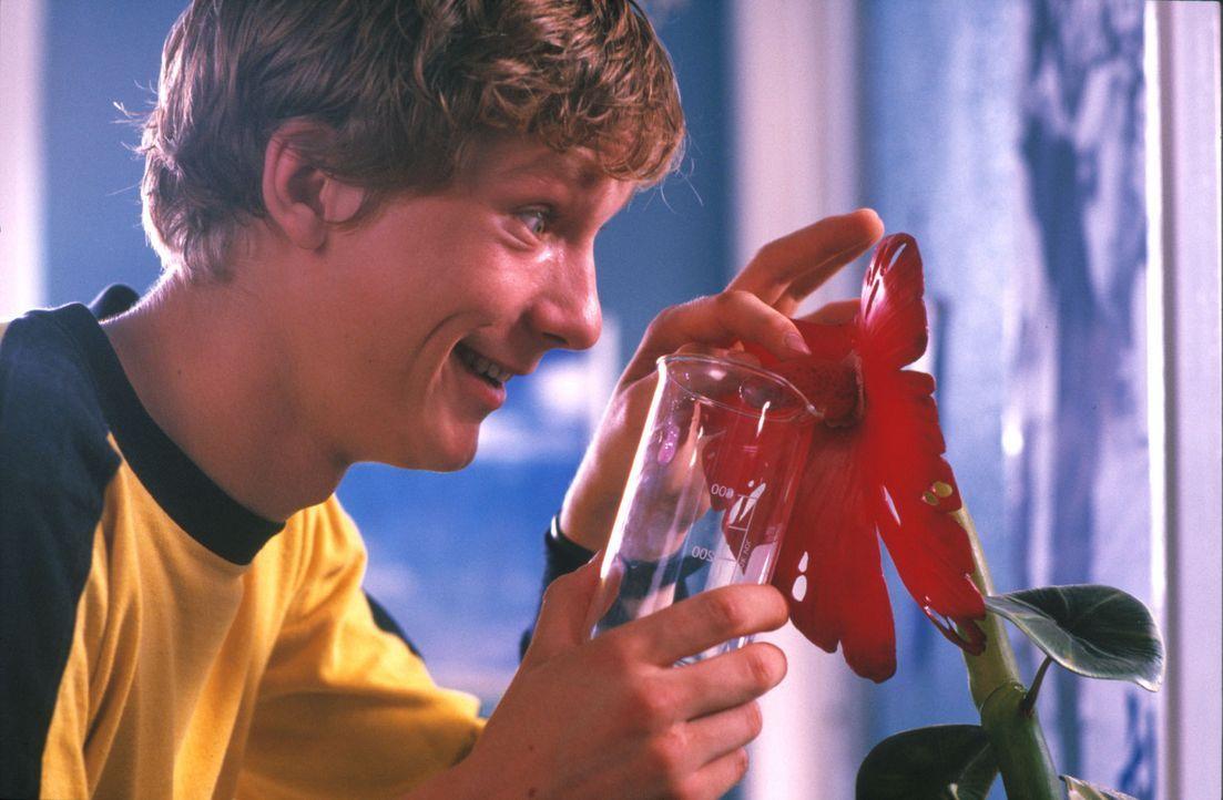 Mit der Hilfe des mysteriösen Pflanzensaftes hofft der liebenswerte Häschen (Jacob Matschenz), endlich ein Mädchen in seinen Bann ziehen zu könn... - Bildquelle: Gordon Mühle ProSieben