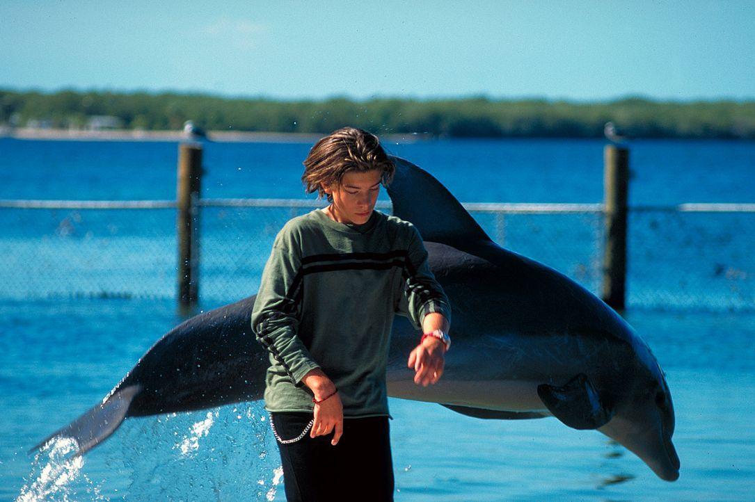 Kann sich noch nicht so recht mit den Delphinen anfreunden: Alex (Philipp Danne) ... - Bildquelle: Leslie Haslam ProSieben