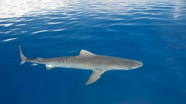 Dr. Sanjayan taucht ein in die weite Welt der Ozeane: Auf den Bahamas erlebt...