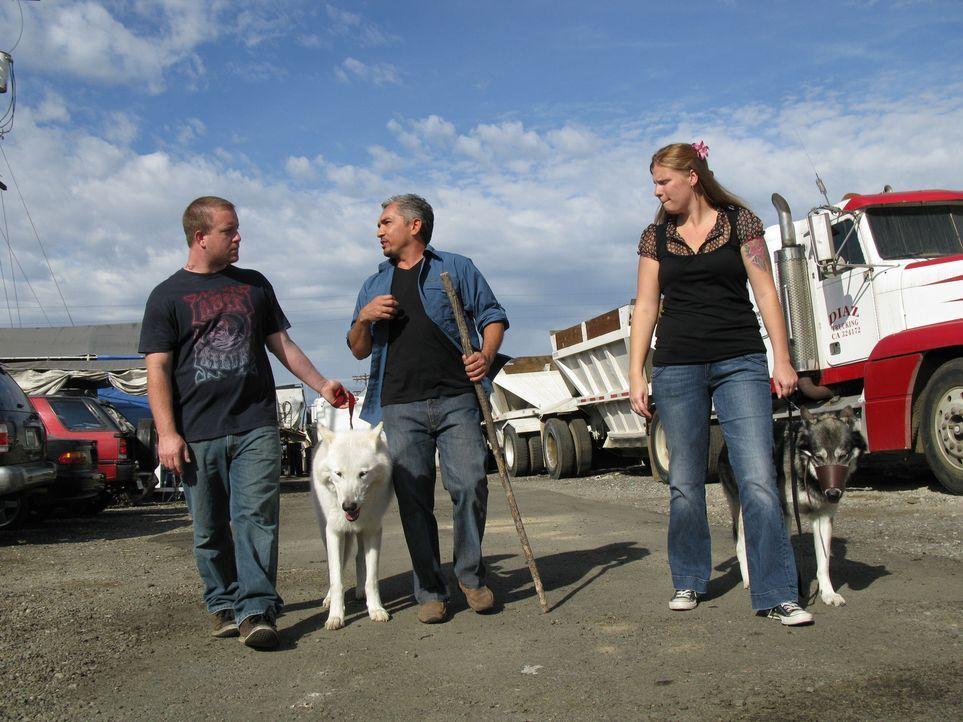 Holly (r.) und Robert (l.) bitten den Hundeflüsterer Cesar Millan (M.) um Hilfe, denn ihre beiden Wolfsmischlinge sind alles andere als pflegeleicht... - Bildquelle: Rive Gauche Intern. Television