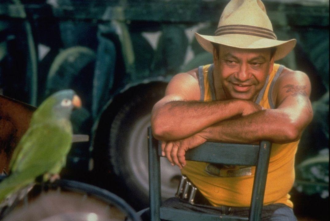 Auf der hoffnungslosen Suche nach seiner besten Freundin stößt der kluge Papagei Paulie (l.) auf den Straßenverkäufer Ignacio (Cheech Marin, r.)... - Bildquelle: DreamWorks