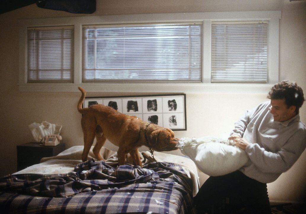 Die Bordeaux-Dogge Huutsch tut seinem neuen Halter das Schrecklichste an, was denkbar ist: Er verwandelt Scotts (Tom Hanks) Heim in ein Chaos ... - Bildquelle: Touchstone Pictures