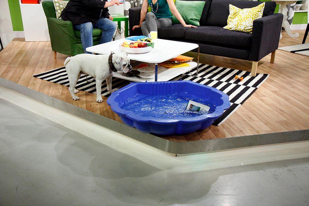 fruehstuecksfernsehen-studiohund-lotte-in-action-im-studio-123 - Bildquelle: Ingo Gauss