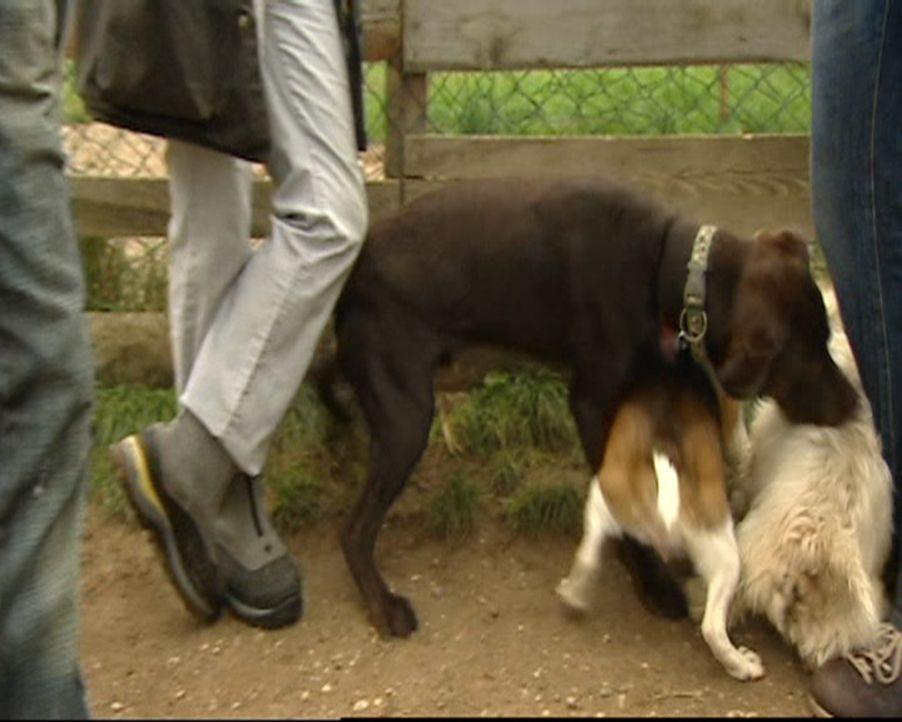 Stefanie ist Hundetherapeutin und hilft verzweifelten Hundebesitzern in ihrer häuslichen Umgebung. Ohne Gewalt und Sprache therapiert sie selbst di... - Bildquelle: SAT.1 Gold