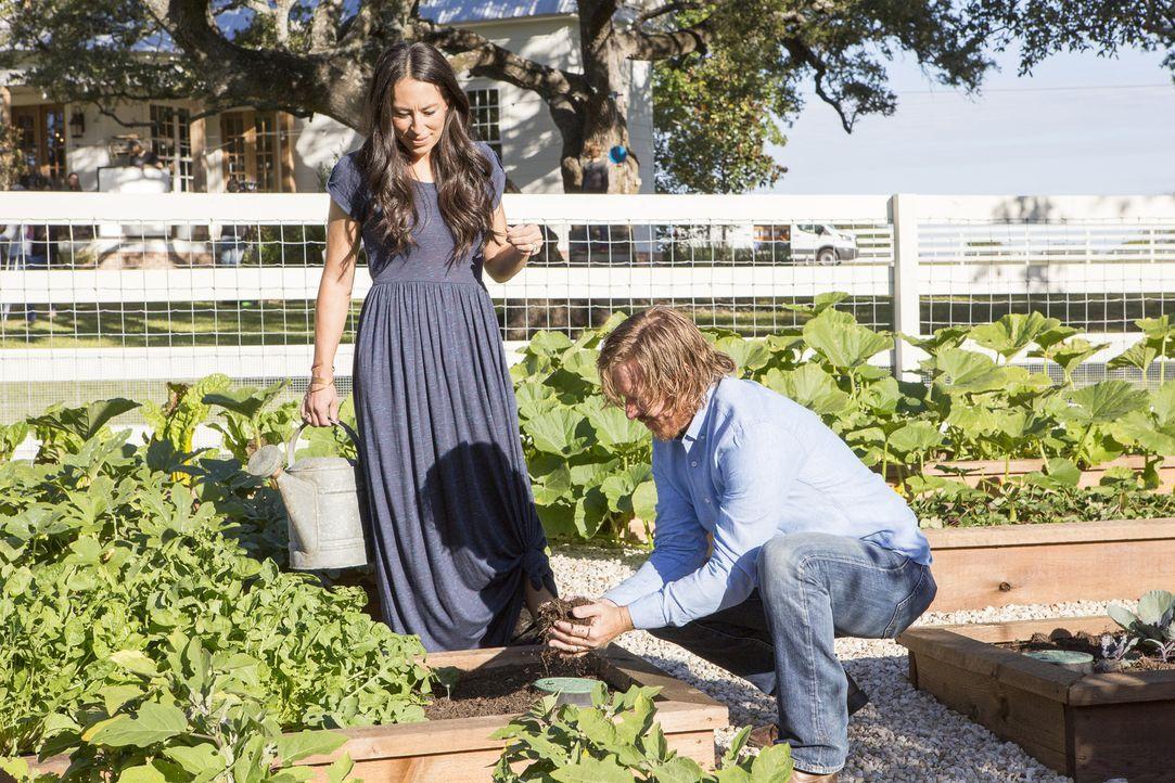 Heute arbeitet das Ehepaar Joanna (l.) und Chip (r.) Gaines an einem privaten Projekt: ein grüner, vielfältiger Garten mit Gartenhaus und Hühnerstal... - Bildquelle: Jennifer Boomer 2018, HGTV/Scripps Networks, LLC. All Rights Reserved.