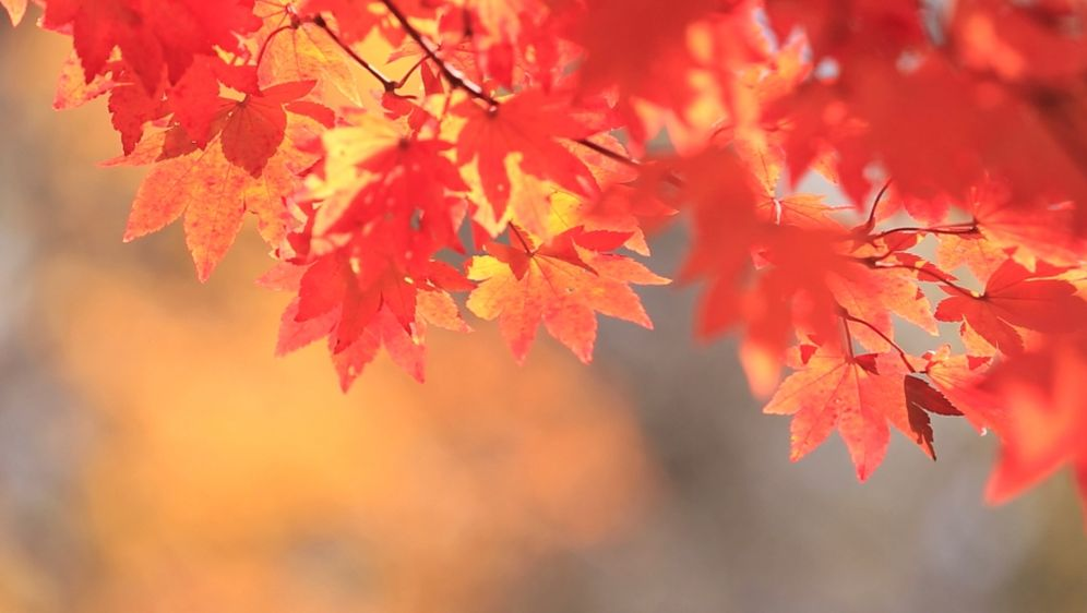 Life Hacks - Herbst