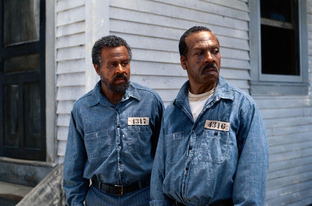 Claude (Martin Lawrence, l.) und Ray (Eddie Murphy, r.) werden wegen Mordes verhaftet, der ihnen vom örtlichen Sheriff angehängt wurde - und zu le... - Bildquelle: 1999 Universal Studios. All rights reserved