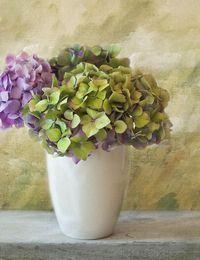 Hortensien Trocknen hortensien pflanzen schneiden vermehren überwintern sat 1