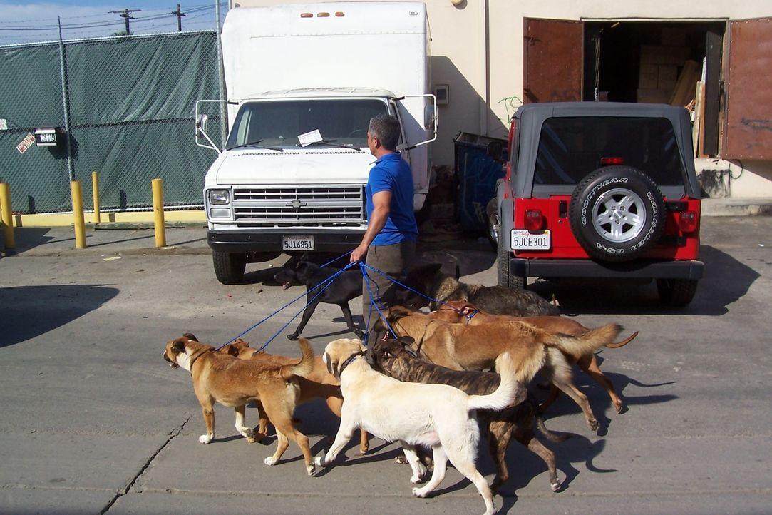 Cesar hat nach dem Hurrikan Katrina drei Hunde in seinem Auffangzentrum in L.A. aufgenommen und sucht schon länger nach den Besitzern der Tiere. Plö... - Bildquelle: Rive Gauche Intern. Television