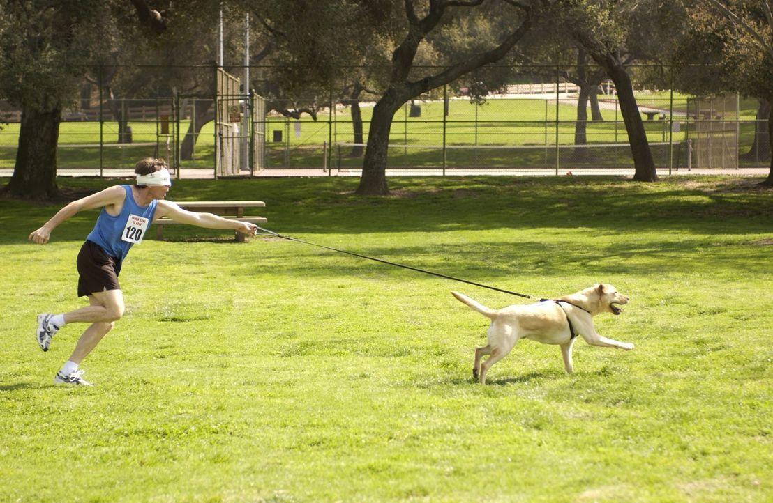 Damit Hal (Bryan Cranston) seinen Sohn Dewey nicht enttäuschen muss, dem er versprochen hat an einem Rennen teilzunehmen, spannt er einen Hund an d... - Bildquelle: TM +   2000 Twentieth Century Fox Film Corporation. All Rights Reserved.
