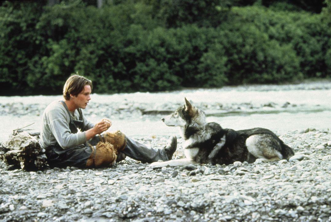 Liebevoll nimmt Jack (Ethan Hawke) seinen tierischen Freund Wolfsblut unter seine Fittiche ... - Bildquelle: Walt Disney Pictures