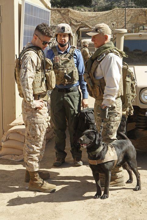 Ein neuer Fall führt Gibbs (Mark Harmon, r.) und McGee (Sean Murray, M.) nach Afghanistan ... - Bildquelle: CBS Television