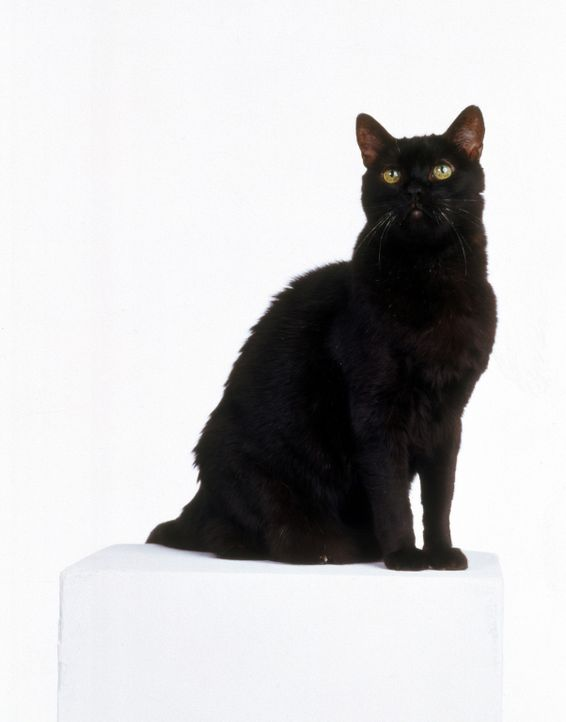 (5. Staffel) - Kater Salem ist eigentlich gar keine Katze, sondern ein Eroberer, der zur Strafe zu einhundert Jahren Katzenleben verurteilt wurde ... - Bildquelle: Paramount Pictures
