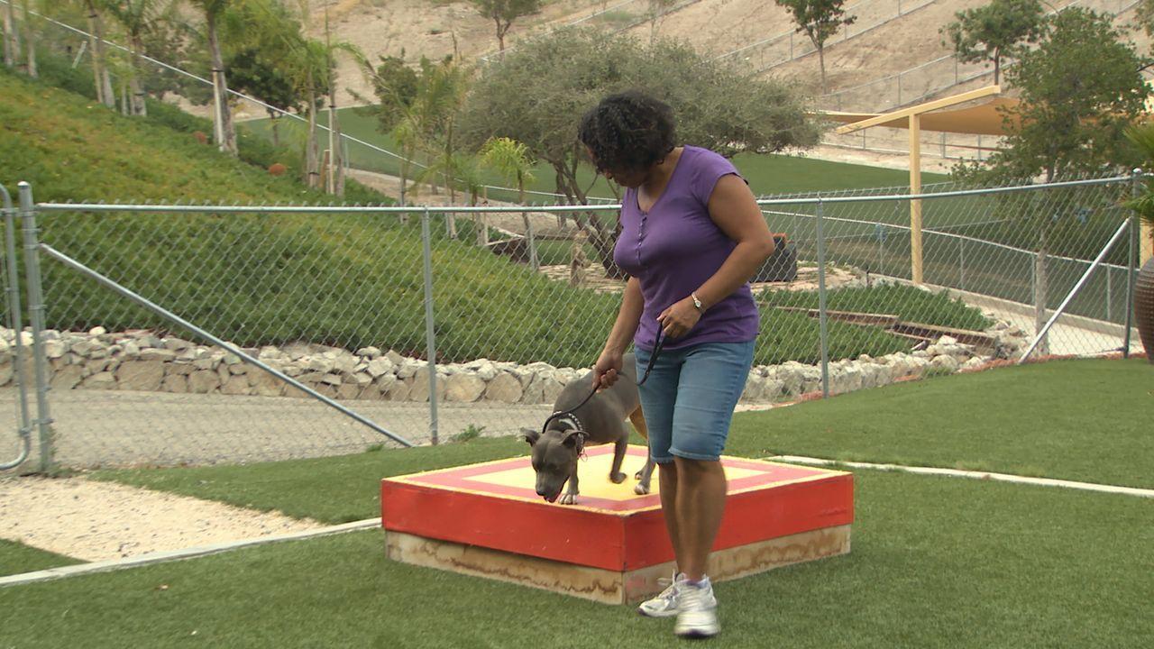 Michelles (Bild) Pitbull Luna sorgt für Unmut in der Familie. Wird es Cesar gelingen, den Hund und das Frauchen trainieren können? - Bildquelle: NGC/ ITV Studios Ltd