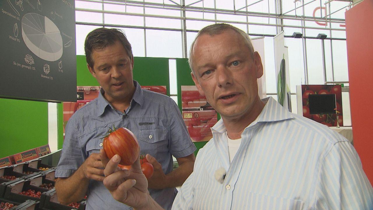 Da haben wir den Salat! - Was taugt unser Gemüse? Harry Schulz (r.) schafft Klarheit ... - Bildquelle: SAT.1