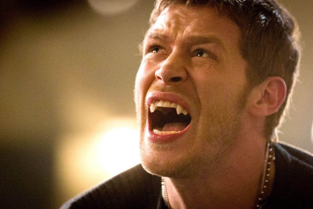 Hat Klaus (Joseph Morgan) Davina und ihre Kräfte unterschätzt? - Bildquelle: Warner Bros. Television