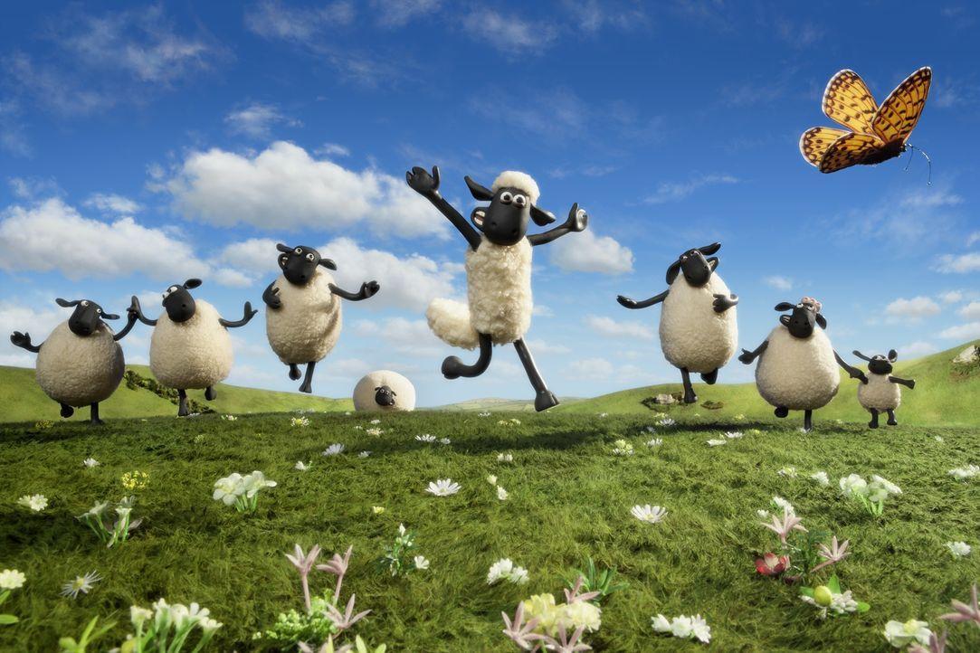 Shaun (M.) und seine Herde wissen, wie man Spaß haben kann, doch als der Bauer plötzlich nicht mehr auf den Hof zurückkehrt, beginnt für die Schafe... - Bildquelle: 2014 AARDMAN ANIMATIONS LIMITED AND STUDIOCANAL SA. A STUDIOCANAL RELEASE. ALL RIGHTS RESERVED.
