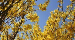 Gartengestaltung_2016_04_06_Hecke schneiden_Bild 4_pixabay