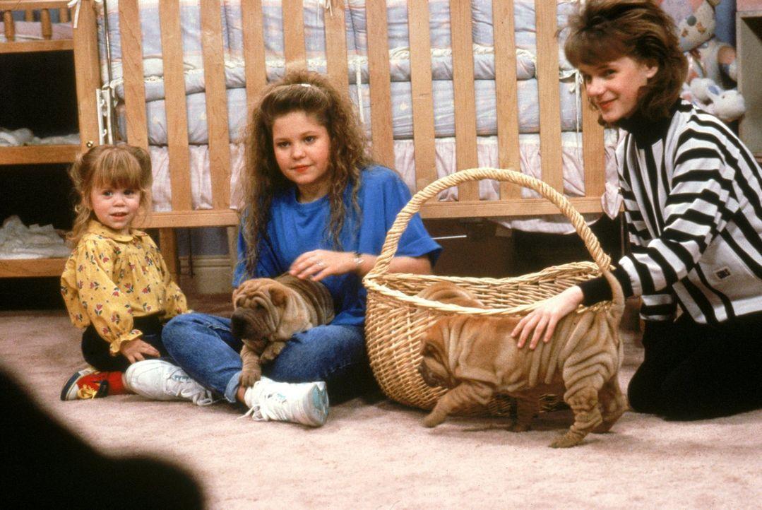 Können die kleinen Hündchen Michelle (Mary-Kate/Ashley Olsen, l.) aufheitern? Bei D.J. (Candace Cameron, M.) und Kimmy (Andrea Barber, r.) scheint e... - Bildquelle: Warner Brothers Inc.