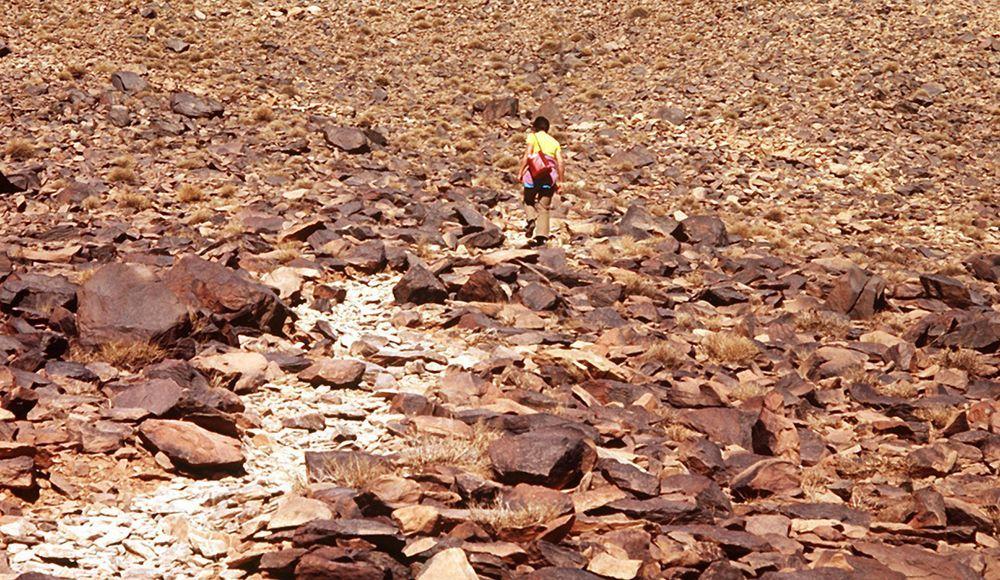 Die unglaublichsten Sahara-Fakten - Bildquelle: dpa
