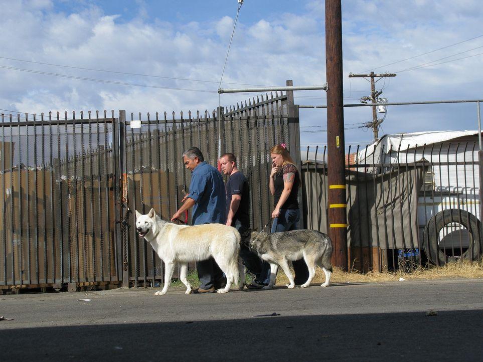Holly (r.) und Robert (M.) bitten den Hundeflüsterer Cesar Millan (l.) um Hilfe, denn ihre beiden Wolfsmischlinge sind alles andere als pflegeleicht... - Bildquelle: Rive Gauche Intern. Television