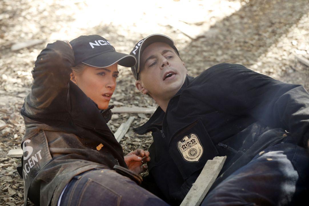 Ein neuer Mordfall beschäftigt McGee (Sean Murray, r.) und Ellie (Emily Wickersham, l.) ... - Bildquelle: CBS Television