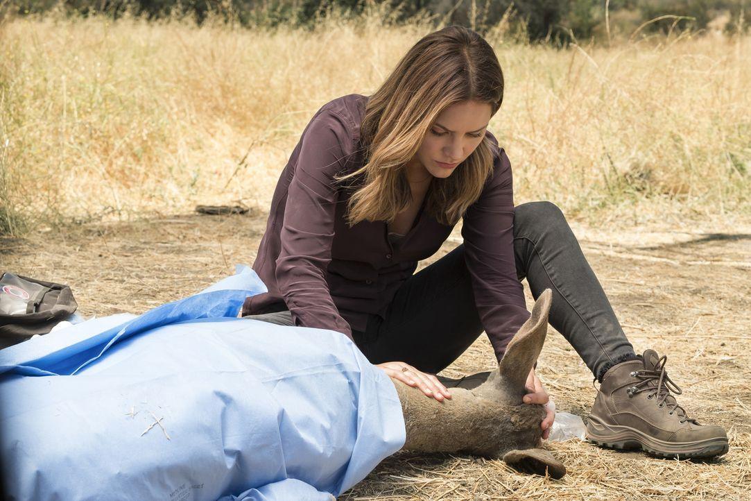 Nutzt ihren weiblichen Charme, um Team Scorpion davon zu überzeugen, dass eine Hirschkuh und ihr Junges es wert sind, gerettet zu werden: Paige (Kat... - Bildquelle: Jessica Brooks 2017 CBS Broadcasting, Inc. All Rights Reserved.