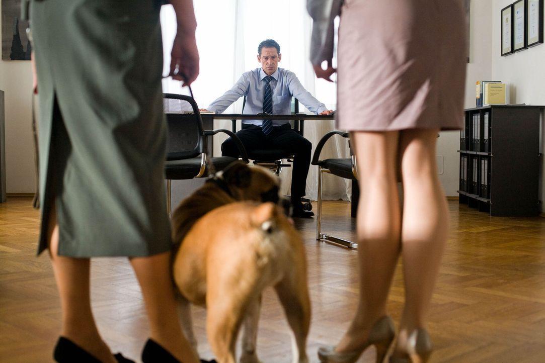 Allein mit den zwei Kindern, einem Hund, den er nicht ausstehen kann und einer äußerst attraktiven Assistentin, die erobert werden will, stößt M... - Bildquelle: Chris Hirschhäuser Sat.1