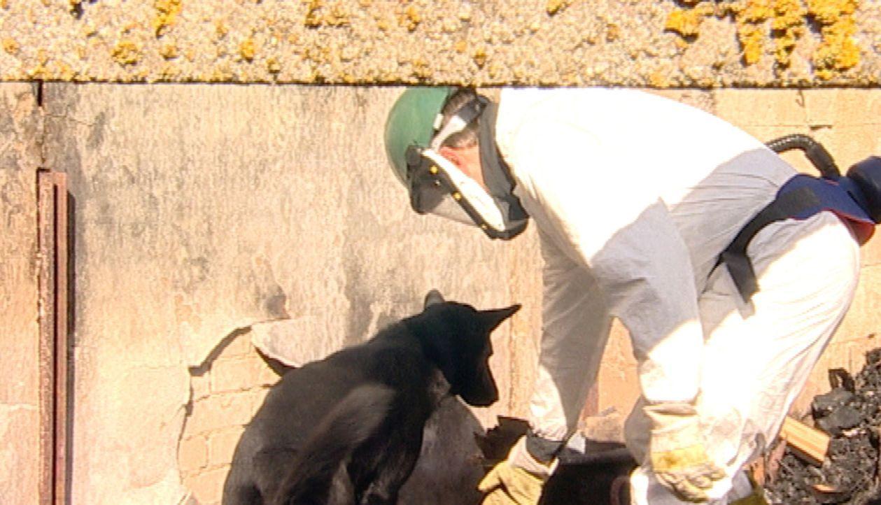 Polizeihundeführer Ralph Puls (r.) und sein Spürhund Aron untersuchen die Brandursache in der Ruine eines Bauernhofes. - Bildquelle: SAT.1