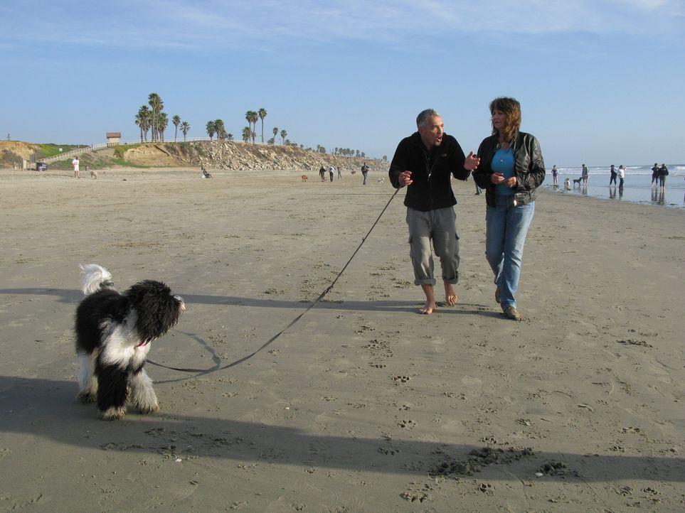 Egal ob Bello, Fiffi oder Wuffi, Cesar Millan (l.) hat für jeden Vierbeiner die passende Lösung parat. Der Hundeprofi ist momentan der berühmteste u... - Bildquelle: Ryan Cass MPH - Emery/Sumner Joint Venture