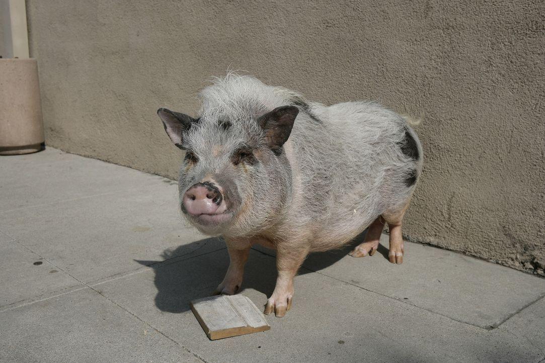 Ein Mörder? Trüffelschwein Pigby ... - Bildquelle: Warner Brothers