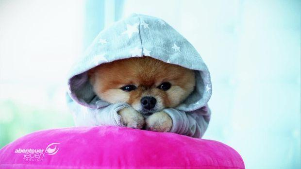 Abenteuer Leben - Täglich - Abenteuer Leben Täglich - Donnerstag: Die Berühmtesten Haustiere