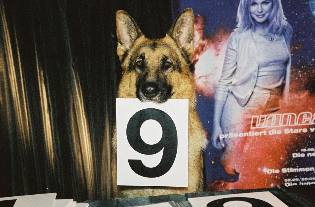 Rex als Juror bei einer Modenschau. - Bildquelle: Ali Schafler Sat.1