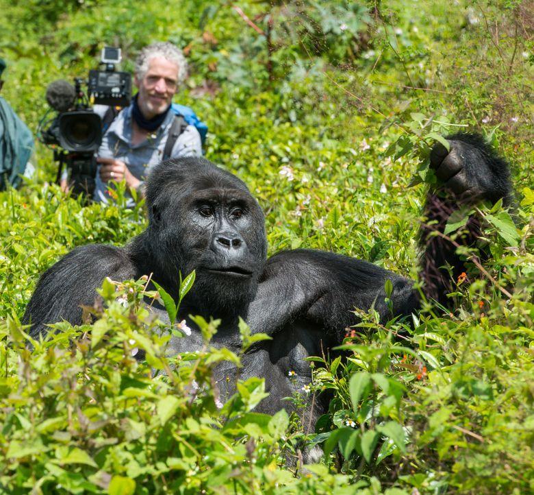 BBC-Tierfilmer Gordon Buchanan (l.) realisiert seinen lang gehegten Traum und versucht in der Demokratischen Republik Kongo, das Vertrauen einer Fam... - Bildquelle: Patrick Evans BBC/Patrick Evans 2015