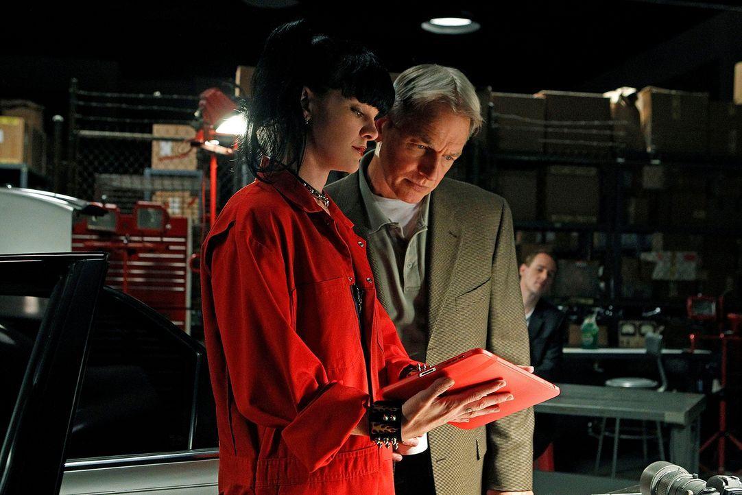 Ermitteln in einem neuen Fall: Gibbs (Mark Harmon, r.) und Abby (Pauley Perette, l.) ... - Bildquelle: CBS Television