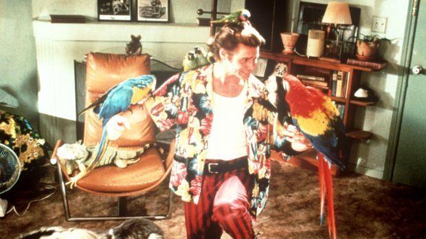 Ace Ventura (Jim Carrey), der etwas schräge Detektiv, ist darauf spezialisier...