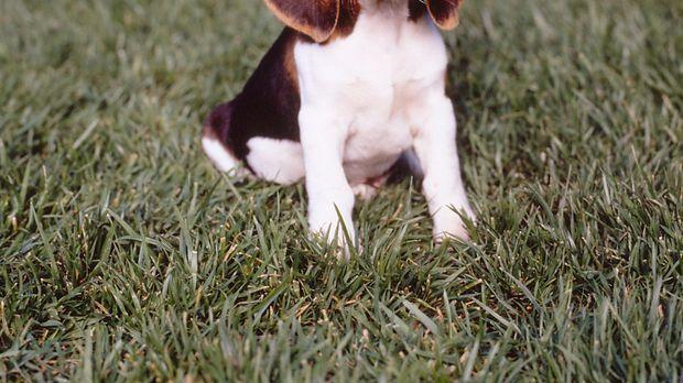 Audie (Puppy) © Paramount Television