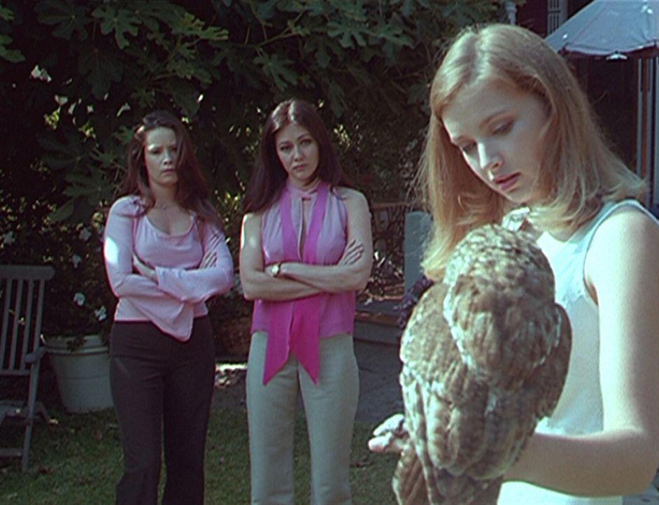 Piper (Holly Marie Combs, l.) und Prue (Shannen Doherty, M.) hören gebannt zu, als Brooke (Elisabeth Harnois, r.) von dem Fluch erzählt, der auf ihr... - Bildquelle: Paramount Pictures