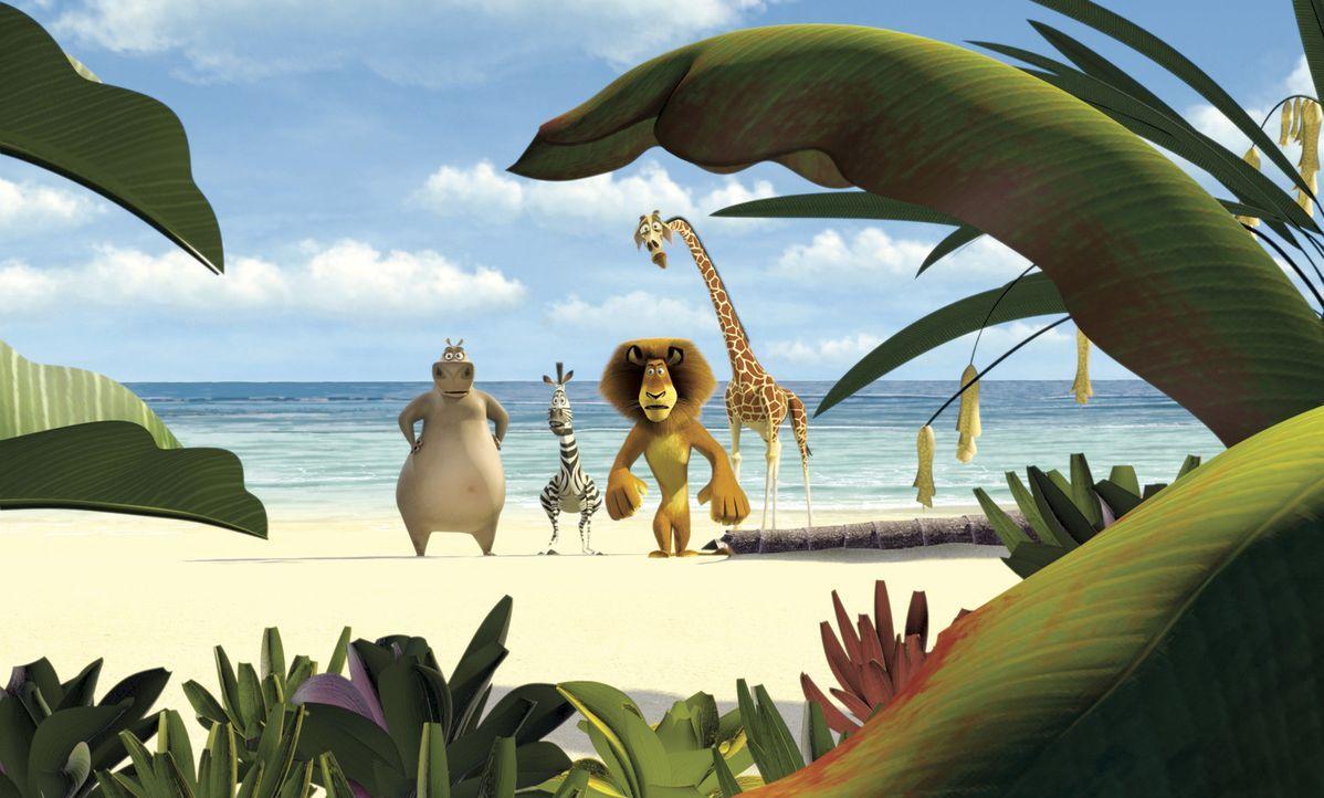 Als Marty flieht,  folgen ihm seine Freunde - und stranden mit ihrem Fluchtschiff vor der Küste Madagascars ... - Bildquelle: TM &   2004 DREAMWORKS ANIMATION SKG.