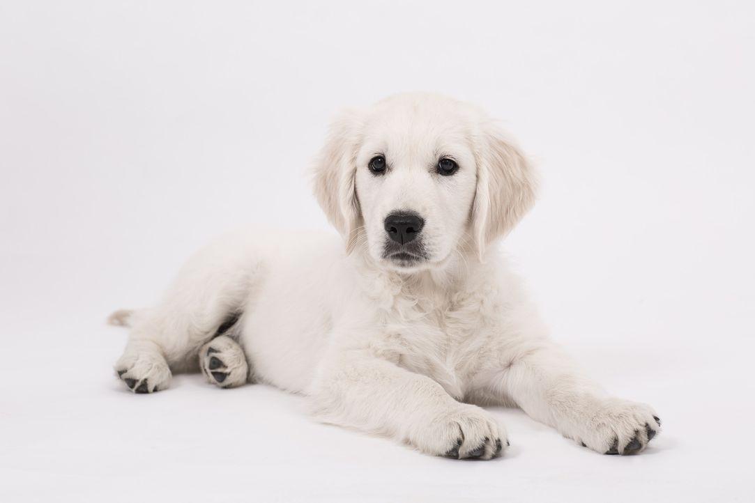 dog-2655469_1920 - Bildquelle: Pixabay