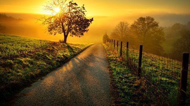 Einsamer Feldweg mit Bäumen am Wegesrand im Sonnenuntergang