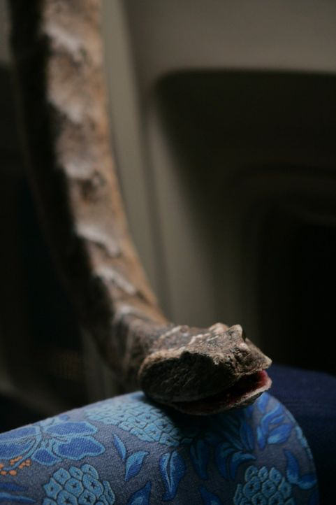 Der nackte Horror: Schlangen fallen von der Decke einer Passagiermaschine - unter den Fluggästen bricht Panik aus ... - Bildquelle: Warner Brothers